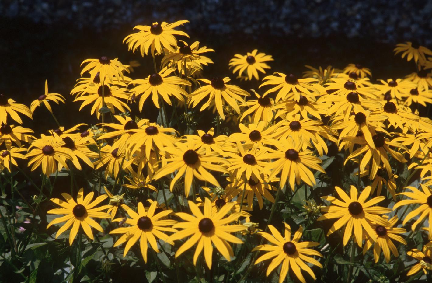 yellow-flowers-ty2.jpg